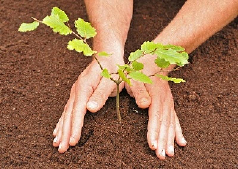 Картинка как сажают дерево 41